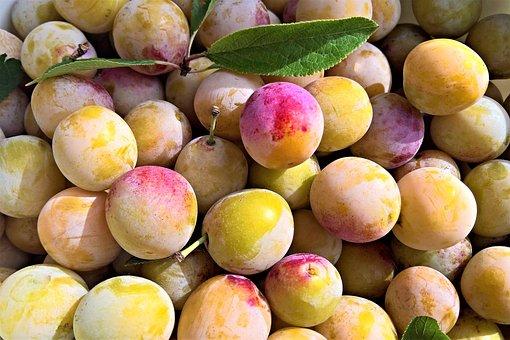 黄色の梅, 果物, 石造りフルーツ, ミラベル梅の木, 庭, 収穫, 黄色の果物