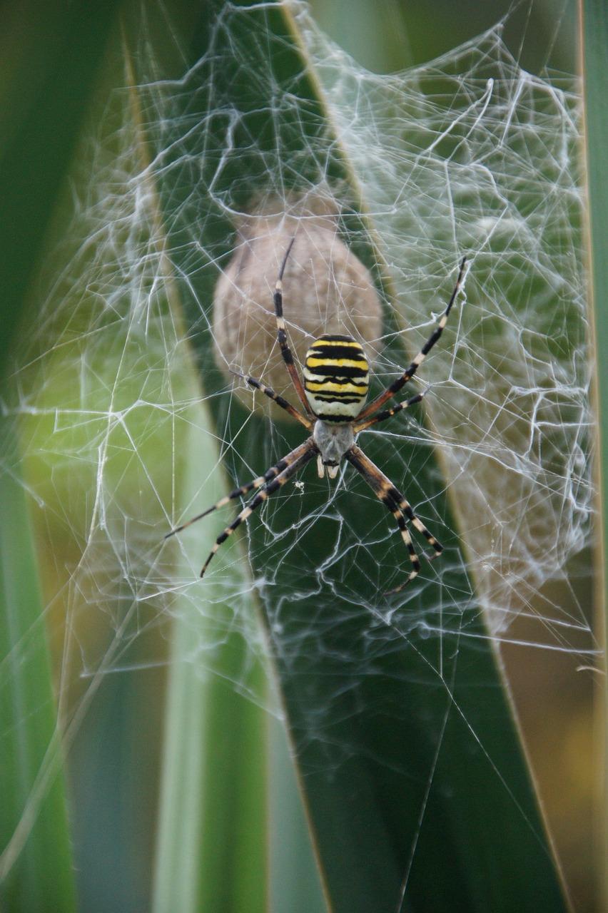Коконы пауков фото