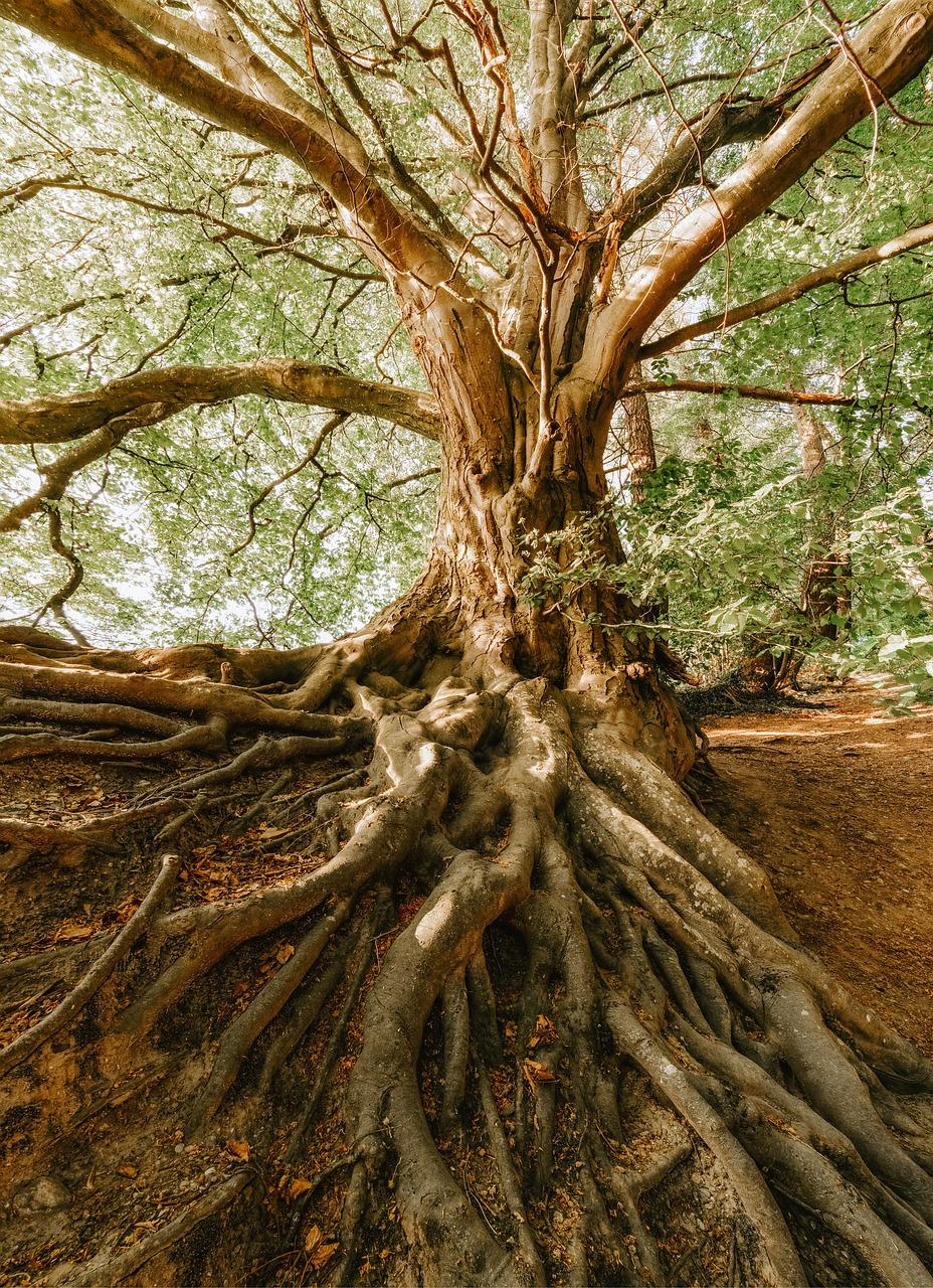 шторы решают деревья с корнями фото прекрасным видом готов