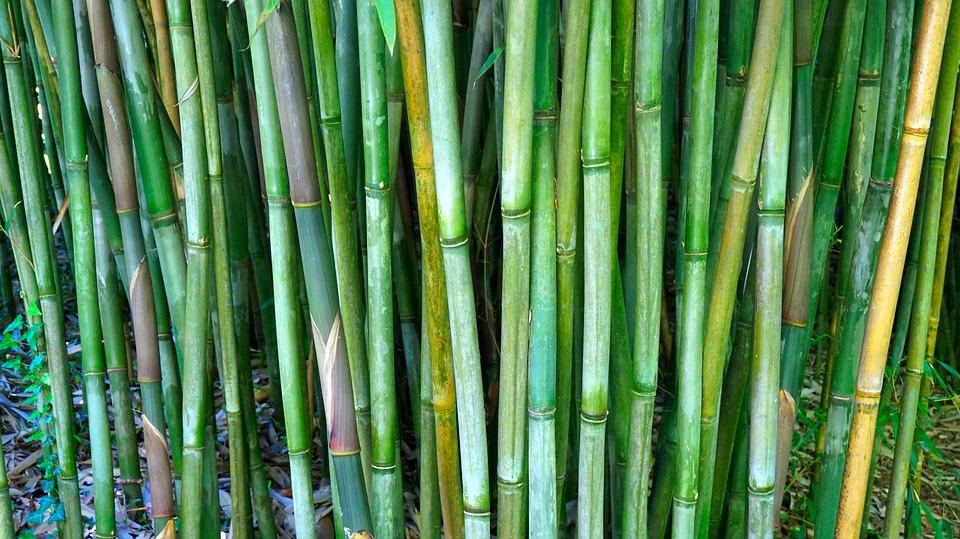 Bambou, Tiges, Tiges De Bambou, Canne De Bambou