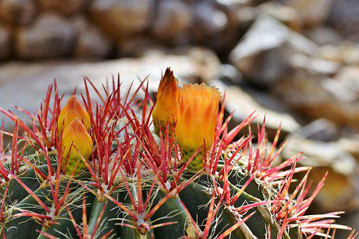 4,000+ Cactus Pictures & Images [HD] - Pixabay - Pixabay