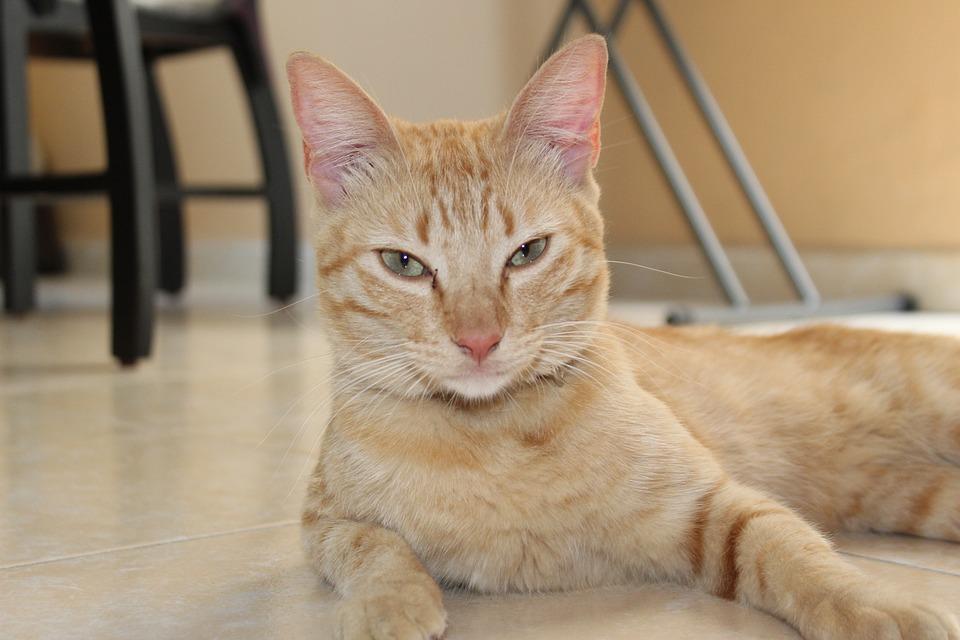 1000+ Gambar Hewan Bahasa Kucing HD