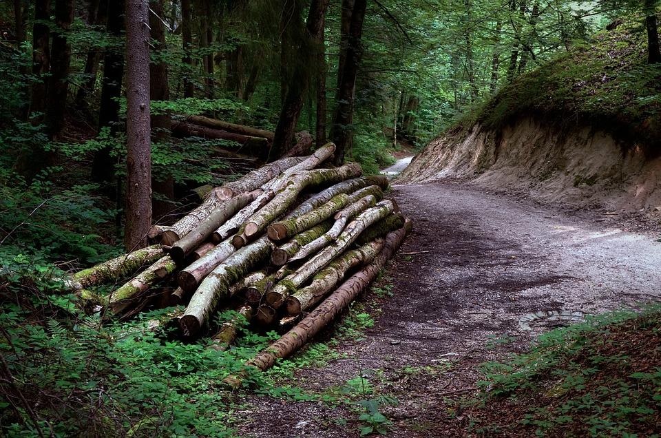 木材, 森, 林業, ネイチャー, ツリー, 風景, 夏, 林, 光, アルプス, 経済学の森