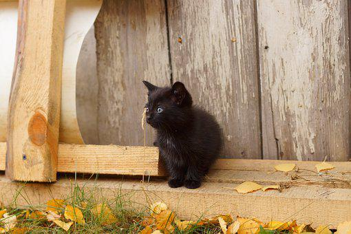 černá teen chlupatá kočička fotky