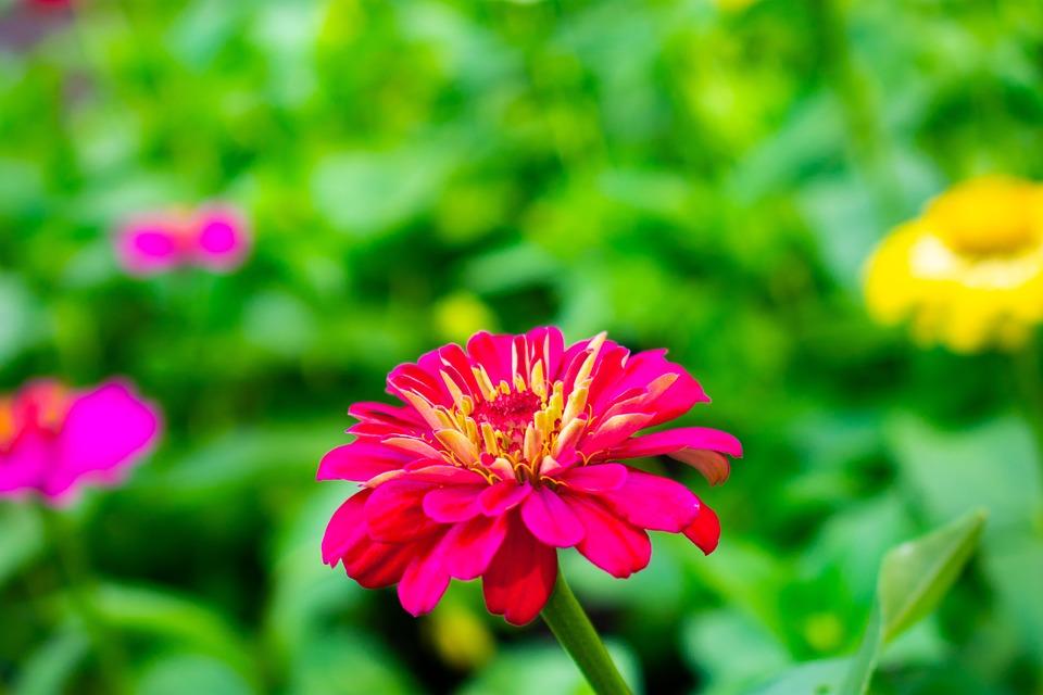 Download 46+ Gambar Bunga Pixabay Paling Keren