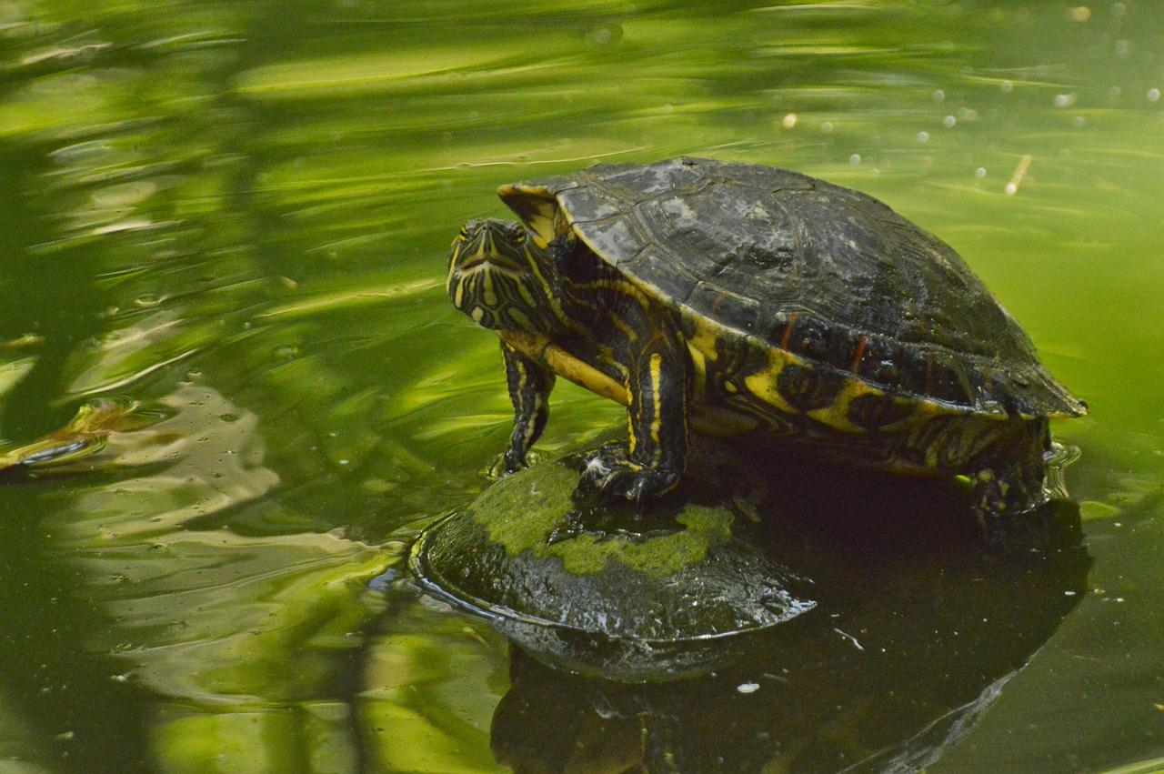 лимпопо красноярск фото черепахи увлечение перетекло студенческие