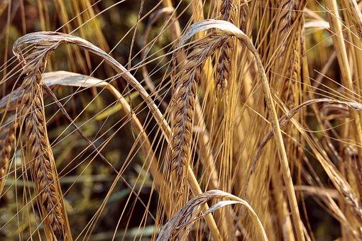 Турция продолжает удерживать лидерство по закупкам российского зерна - эксперты