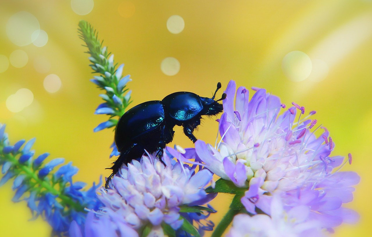 жуки таити фото москву