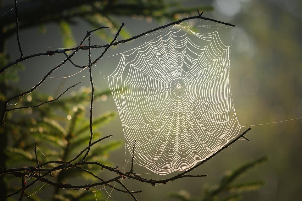 Teia De Aranha, Aranha, Inseto, Natureza, Rede