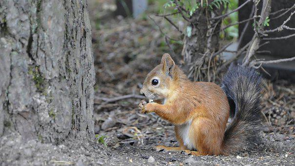 2,000+ Free Squirrel & Animal Images - Pixabay