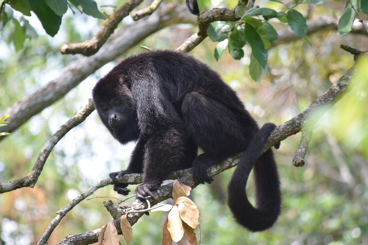гамма варьируется картинка обезьяна паука создаёт миниатюрную еду