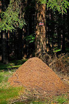 Anthill, Forest, Nature, Trail, Ants
