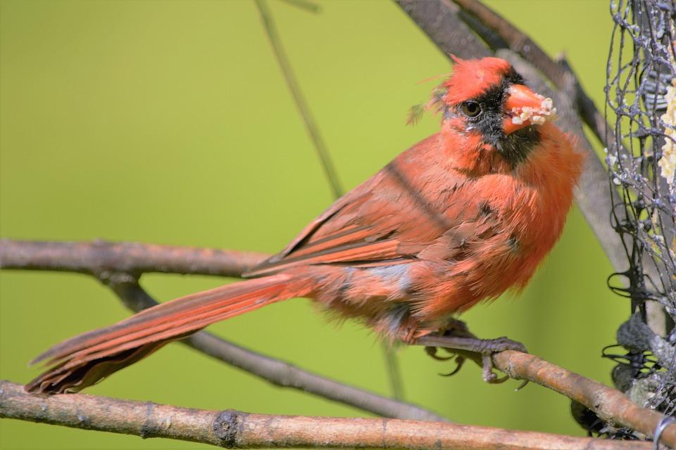 obrázky mužov vtáky