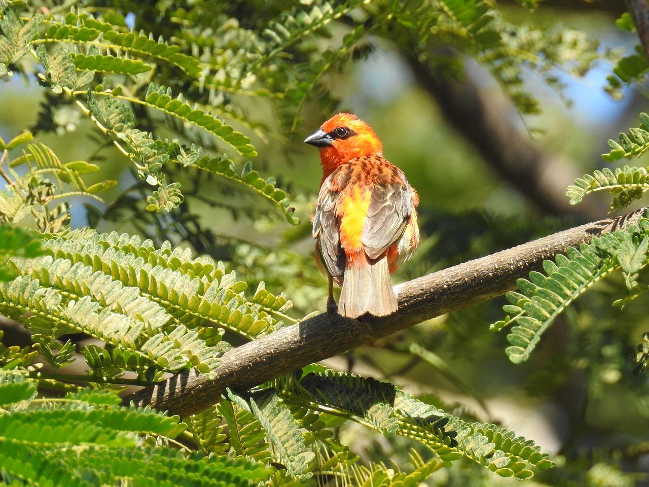 Картинки первые птицы весны что