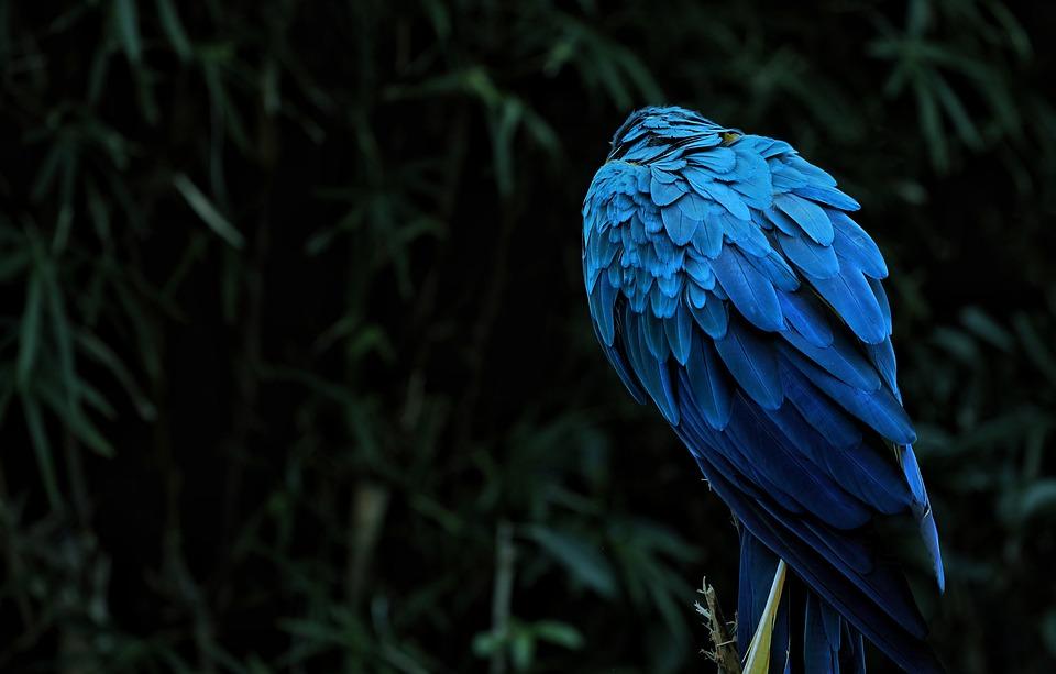 6200 Gambar Hewan Burung Kakatua Gratis Terbaru