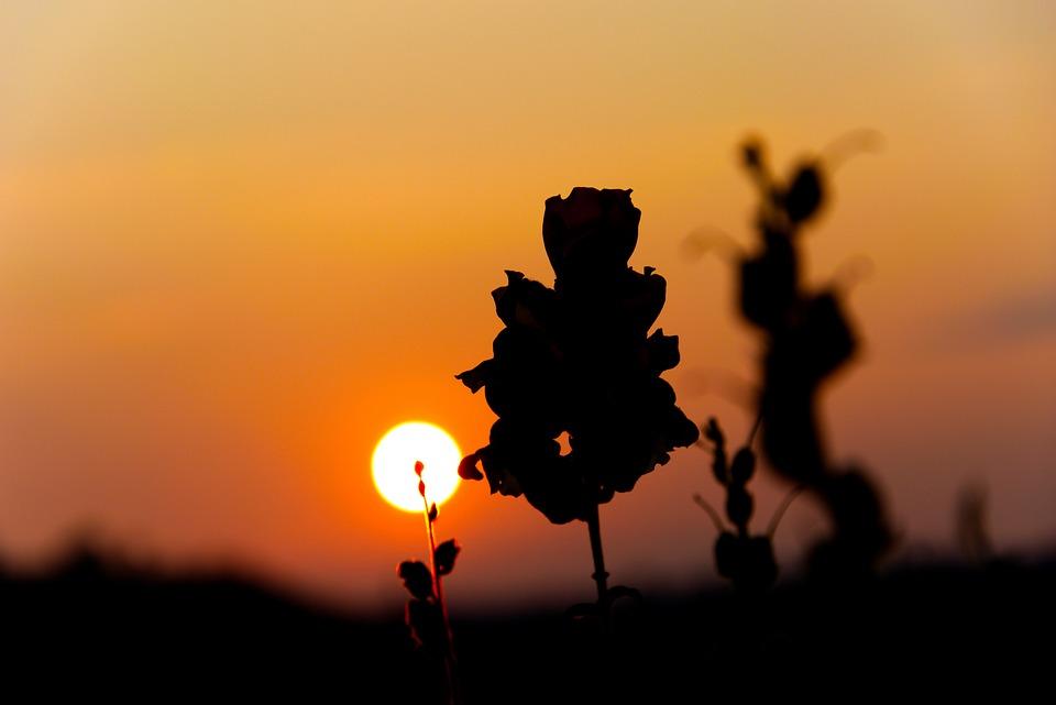 Восход Солнца, Цветок, Природы, Завод, Лето, Надежда