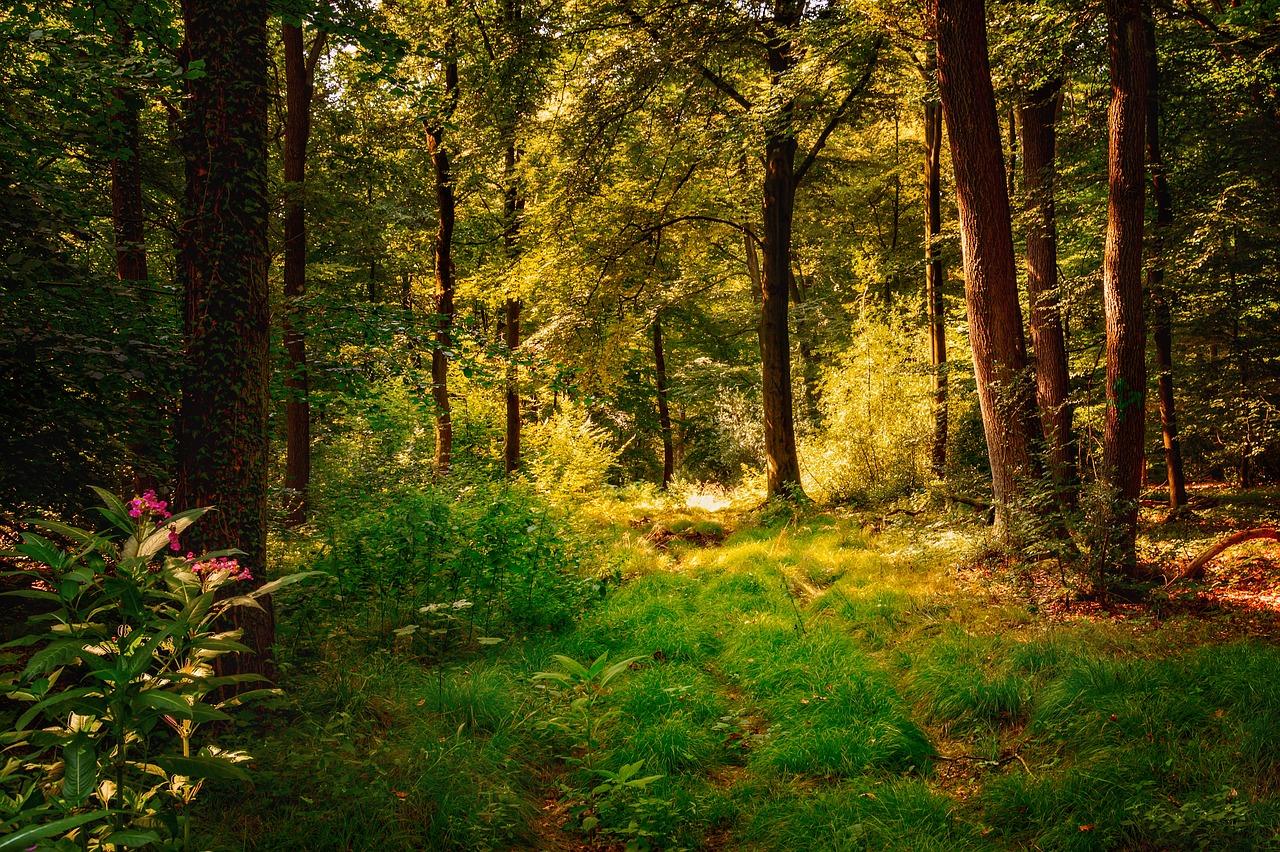тату открытки лес поляна закончила давно