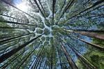 drzewo, krajobraz, tam w tle