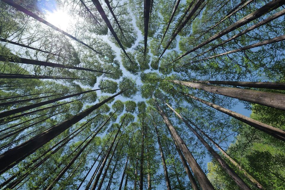Árbol, Paisaje, Allí En El Fondo, Bosque, Koyo