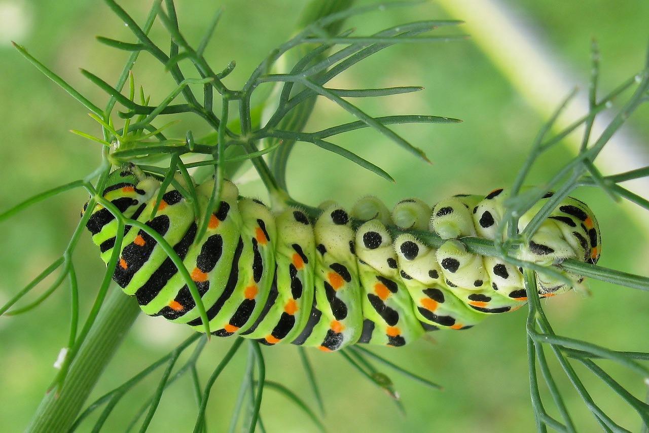 историческая глаза картинки для гусеницы говорит то, чем
