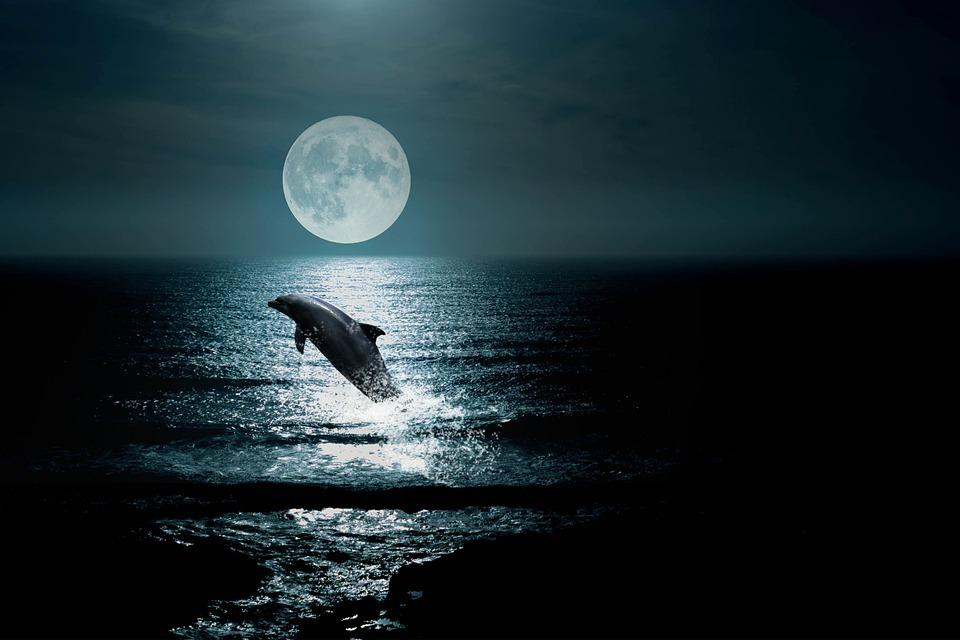Пейзаж, Sea, Небе, Нощ, Делфин, Moon, Облаци