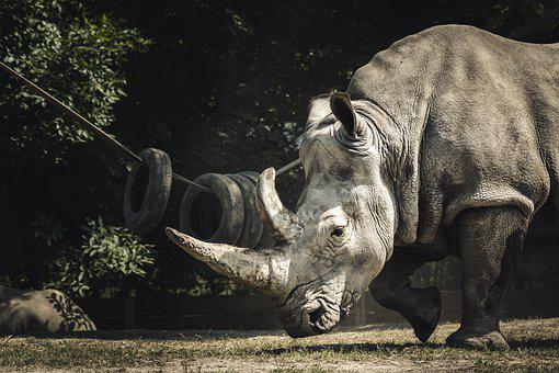 900+ Rhinoceros Pictures and Images in HD - Pixabay - Pixabay
