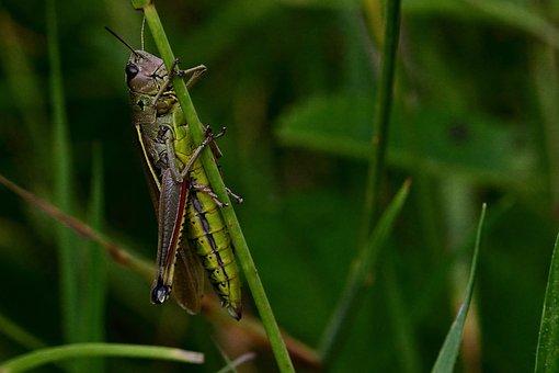 1,000+ Free Grasshoppers & Grasshopper Images - Pixabay