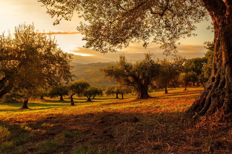 Campo, Árboles, Naturaleza, Puesta De Sol