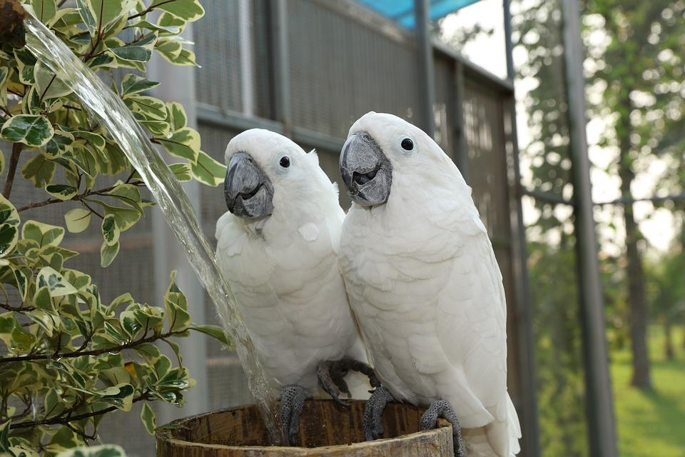 Las mejores jaulas para aves