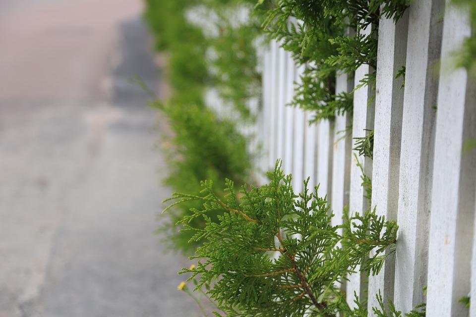 plants-4454425_960_720.jpg?profile=RESIZE_710x