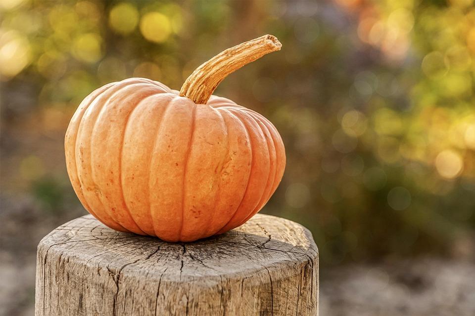 Тиква, Есента, Реколта, Хелоуин