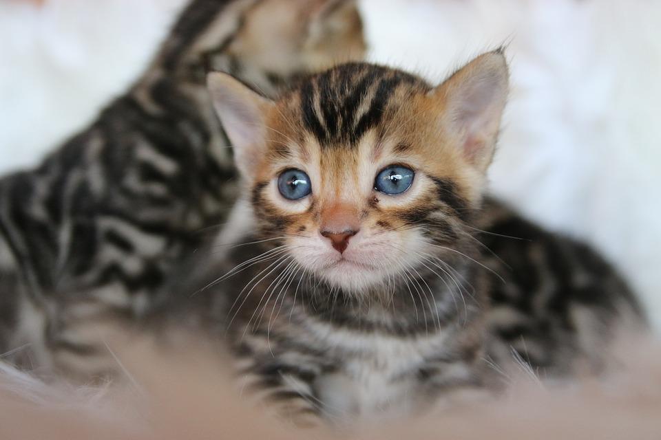 Stáhněte si tento bezplatný obrázek o Kočka Mladá Zvířata Kočička z rozsáhlé knihovny společností Pixabay, která obsahuje obrázky a videa z veřejných.