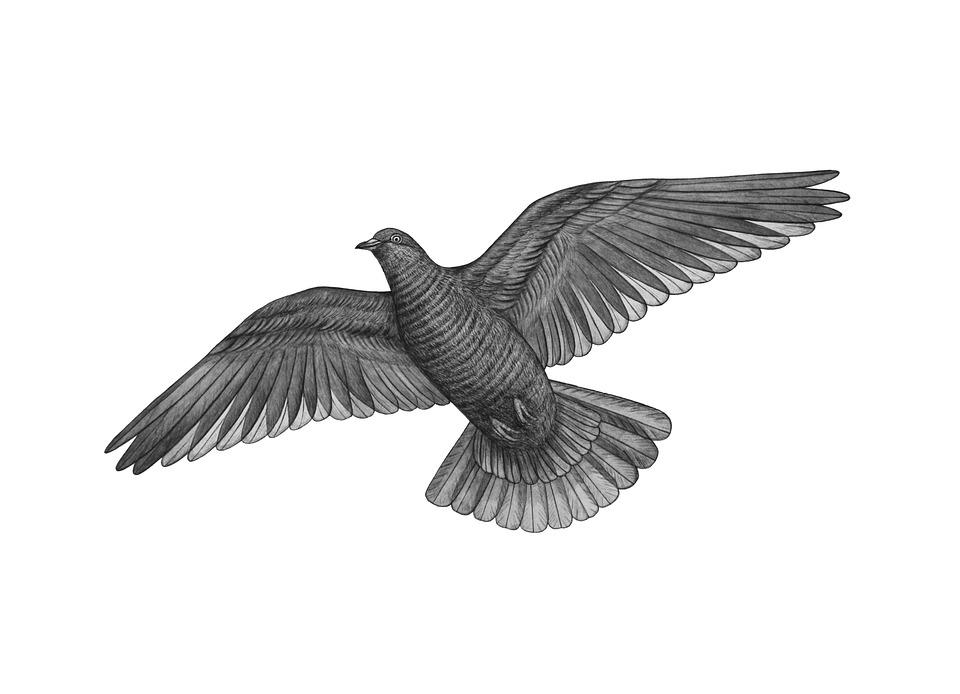 Uccello Colomba Piccione Foto Gratis Su Pixabay