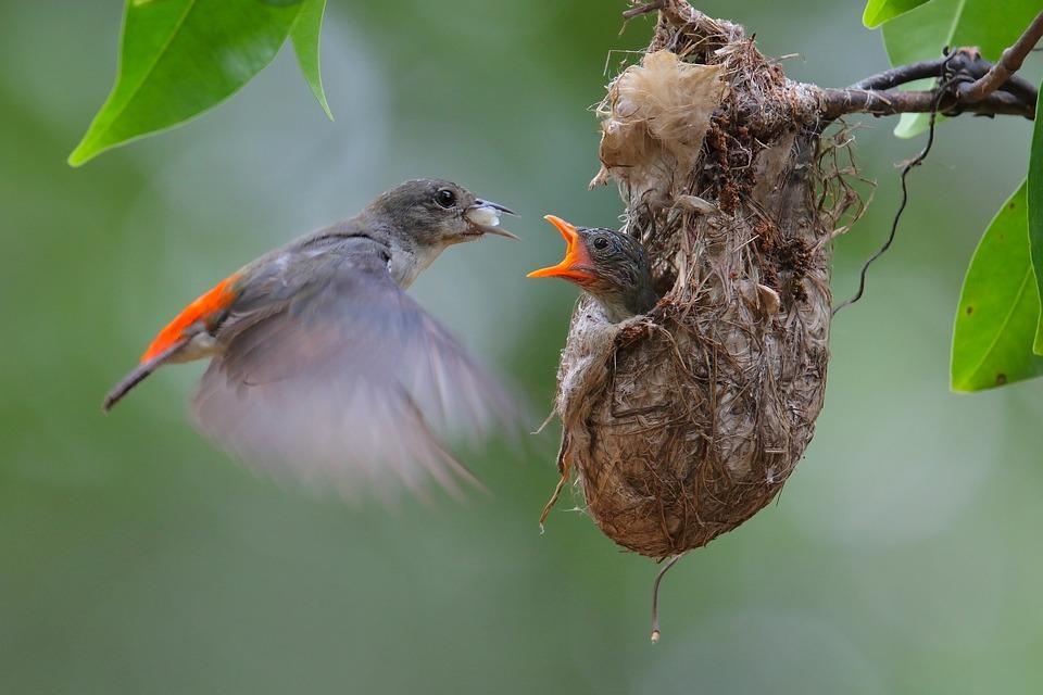 picsof ptáci