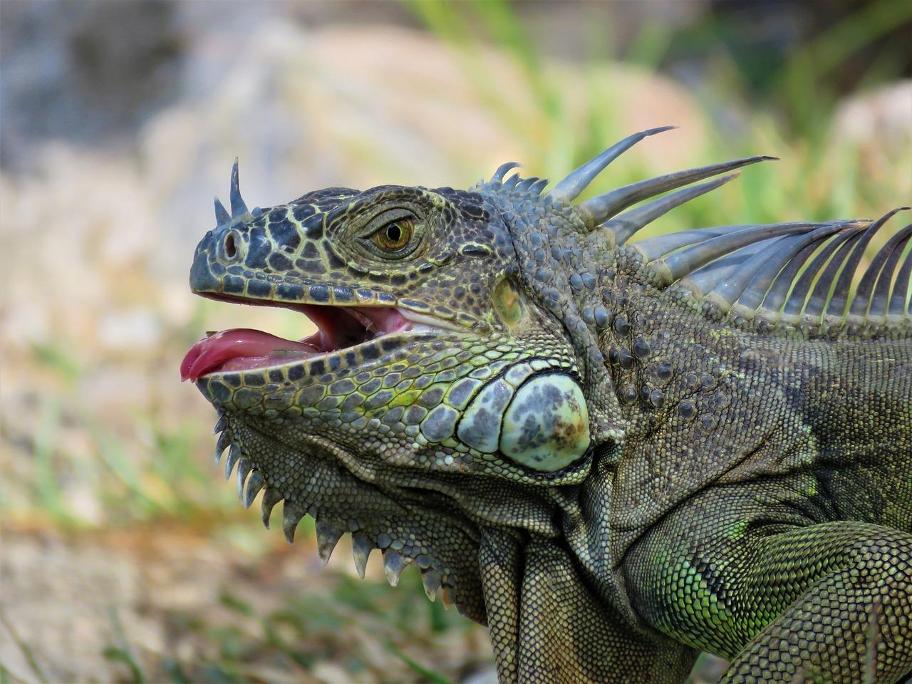 боишься забеременеть, дракон ящерица фото ооо