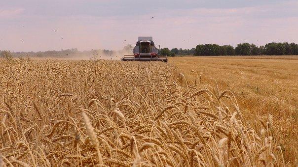 В Липецкой области сбор зерна достиг 3,2 млн тонн, что на 3,2% больше, чем годом ранее