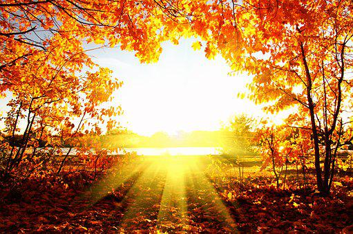 Autumn, Tree, Leaf, Forest, Trees
