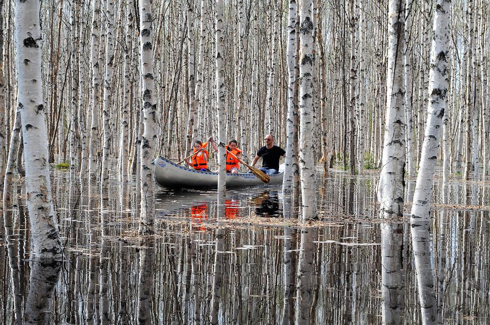 Water, Birch, Lake, Tree, Nature, Forest, Summer, Canoe