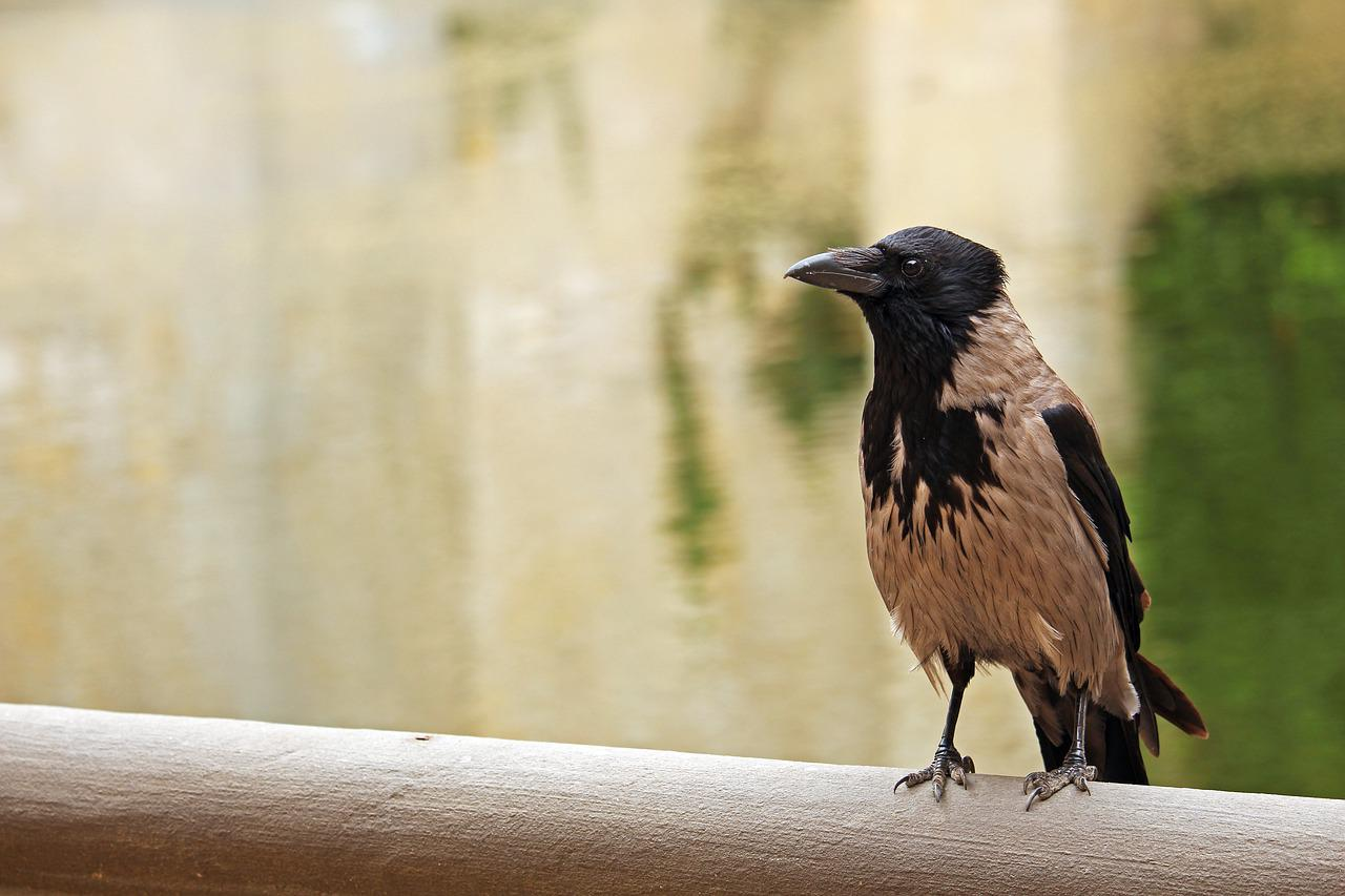 Картинка ворона с надписью, немецкому открытка