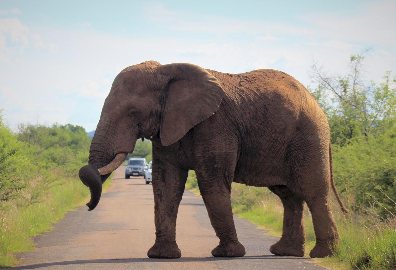 день размеры слона картинки красивых дорогих авто