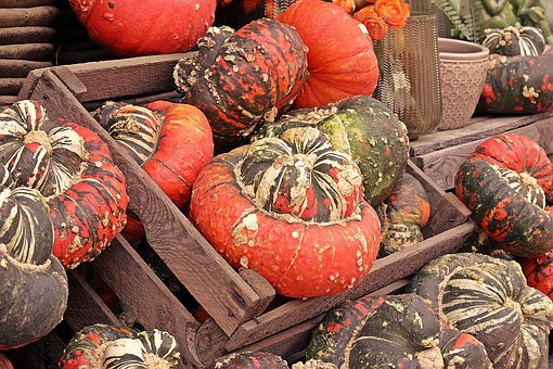 pumpkin-4465394__340.jpg
