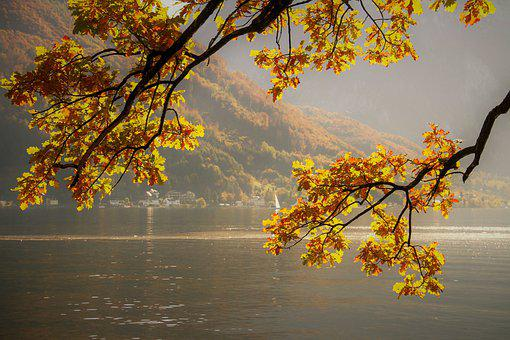 Autumn, Fall Leaves, Yellow, Bright
