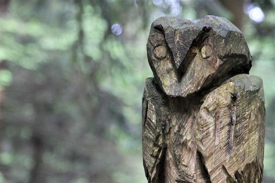 Burung Hantu Kayu Hutan Elang Foto Gratis Di Pixabay
