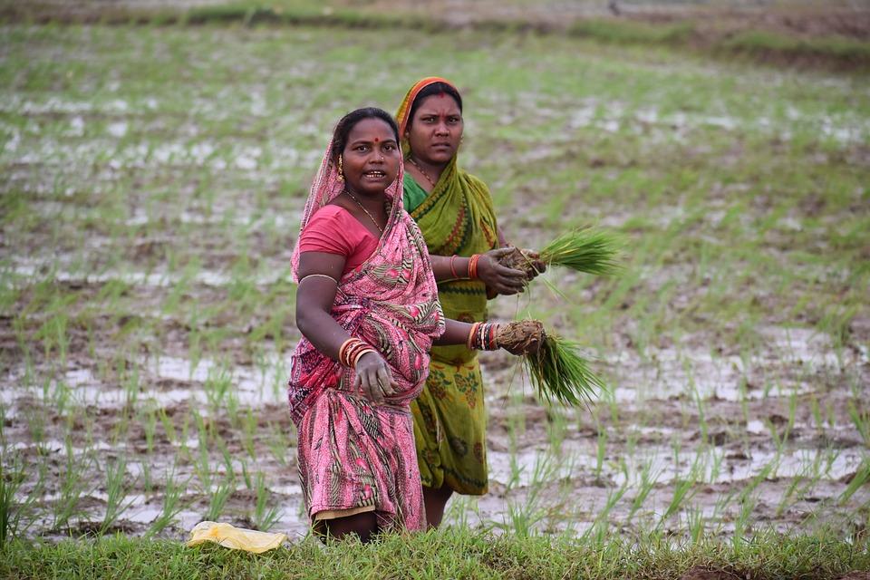 2 人の女性, サリ, 米, 農家