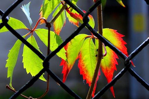 Leaves, Leaf, Colorful, Autumn