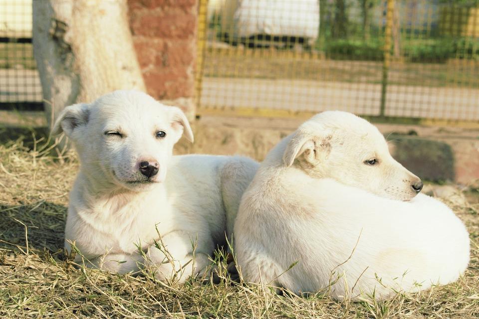 Hund Ostern Guten Morgen Glücklich Kostenloses Foto Auf