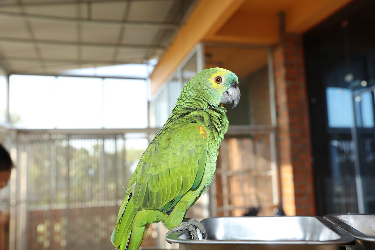 Зеленый попугай фото картинки