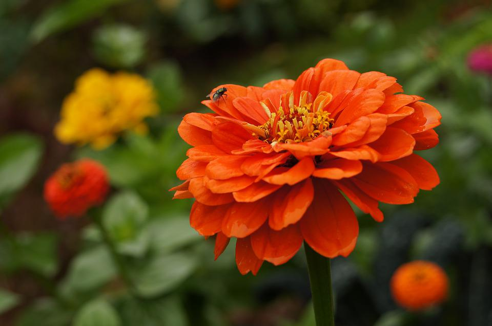 Fleur Orange Coloré , Photo gratuite sur Pixabay
