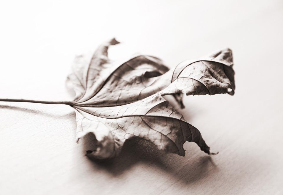 Autumn, Maple, Leaves, October, Season, Mood
