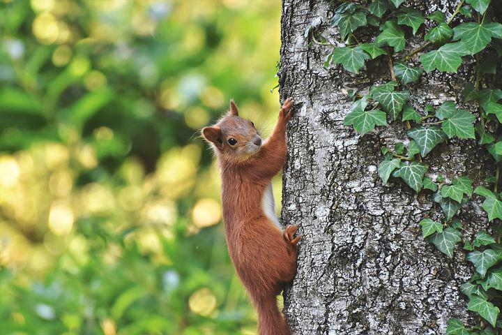 Image of a squirrel climbing a tree.